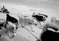 ARCTIC SLED BW DOG